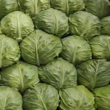 韩国金峰白菜