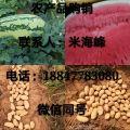 yabo88狗亚体育app太子