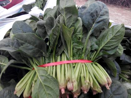 大叶菠菜价格图片