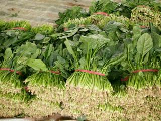 大叶菠菜25一3o公分:0.25元/斤图片
