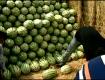 代办多年,硒砂瓜正式上市