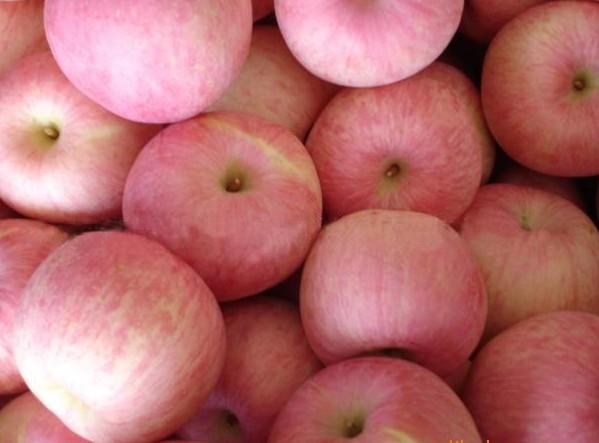 供应 瓦房店市驼山乡红富士苹果图片