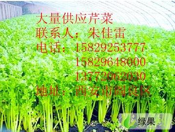 供应:美国西芹西安市阎良区佳雷蔬菜专业合作社