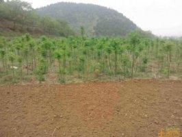辉县1500亩带证山林地转让价格