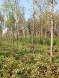 南阳市城郊460亩退耕还林地出租价格