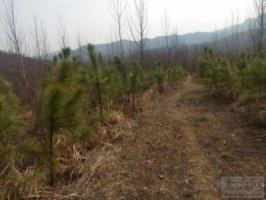 桐柏县回龙镇1200亩林地转让价格