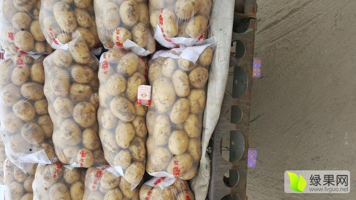河北昌黎土豆种植基地东风货栈 - 土豆价格网