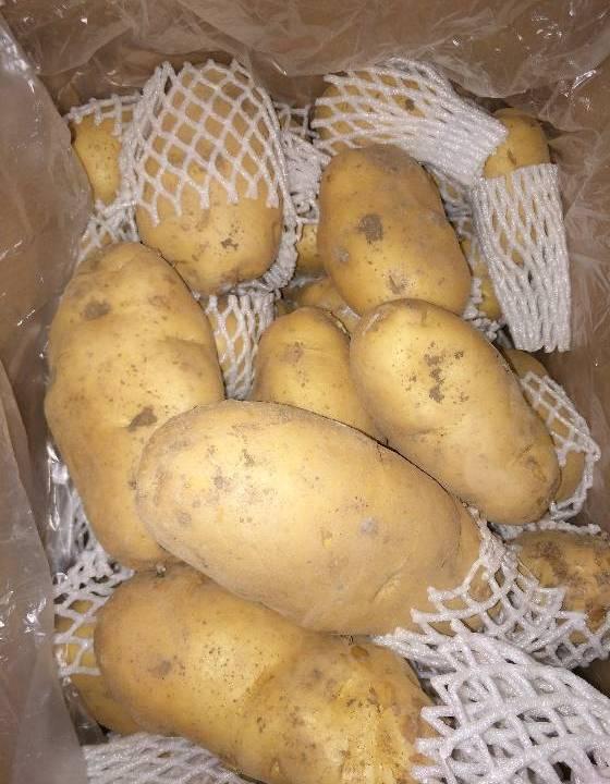 2018年土豆价格行情 平度荷兰十五土豆,当年冷库存货  山东省青岛市