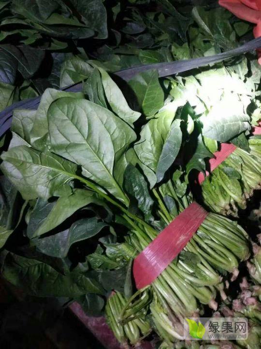 01月06日聊城大叶菠菜菠菜报价[王梅敬提供]图片