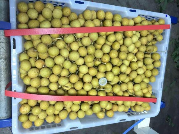 海吉星水果批发市场