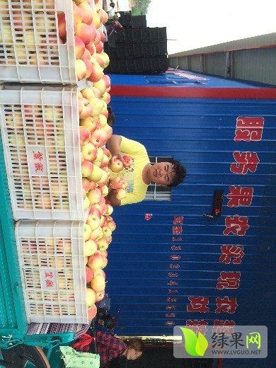 2016年山西运城临亚博猗县嘎拉苹果的价钱行情总结
