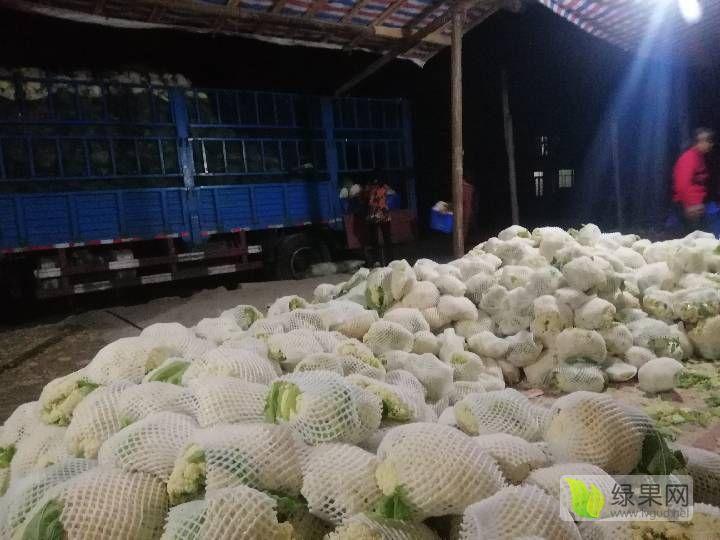 湖北天门市白花菜花、甘蓝、有机花、西兰花主产大基地