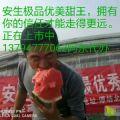甜王西瓜14度糖,大红瓤口感纯正