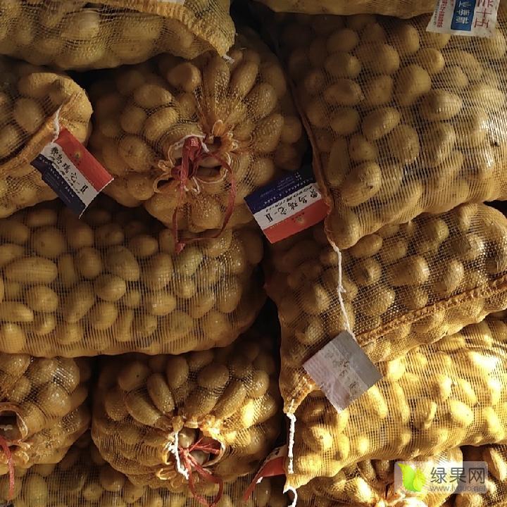 秋季优质脱毒种薯开始上市