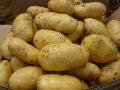 特供通许土豆