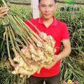 潍坊鄌郚西瓜