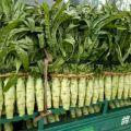 苍山蔬菜基地