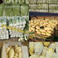 肥城土豆白菜之乡