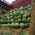 瓜菜种植基地