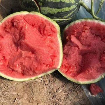 li西瓜土豆