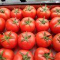 温州蔬菜代销