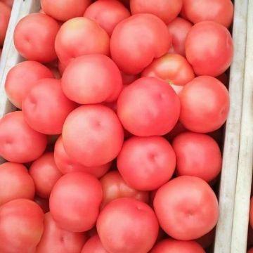 西紅柿專業代收
