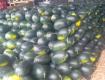 黑美人西瓜大量上市中 个大瓜甜 价格便宜