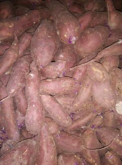 商薯19红薯价格