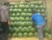 安徽砀山京欣西瓜大量上市供应全国