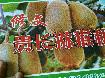 野生猕猴桃价格