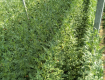 仁风种植富硒西瓜小兰西瓜,1.5-3斤,皮薄汁多