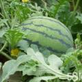 山岭种植,使用有机肥