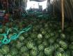 缅甸西瓜,甜瓜大吨位供货