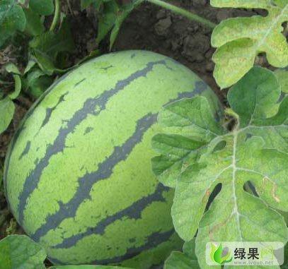 濮阳市南乐县福勘镇西瓜,蔬菜批发服务中
