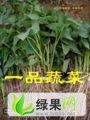 山东莱阳一级脱毒紫薯苗