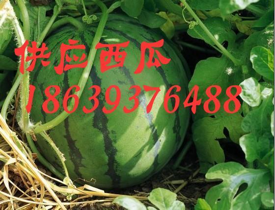 河南南乐福堪镇西瓜市场:优质西瓜
