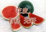 山东泗水黑美人:杨柳镇张荣义