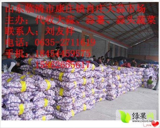 山東臨清辮子蒜種子:劉友祥專業代辦15506453546
