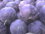 黑皮无籽西瓜品质好、瓜个大、含糖量高