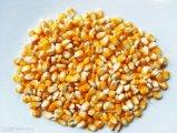 湖北嘉鱼6-9月供应玉米