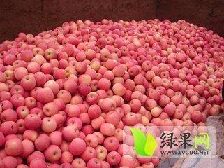 红富士苹果价格