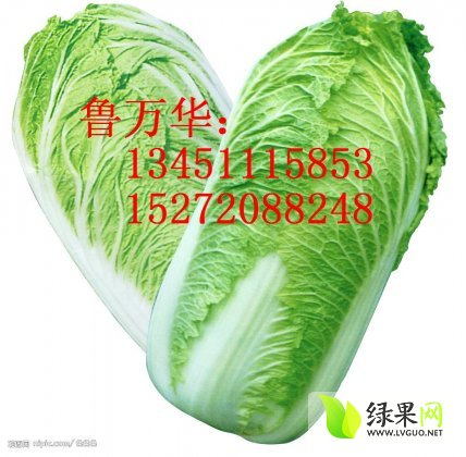 白菜 無限