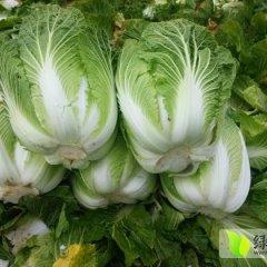 浙江温岭大白菜品质优良(箬横老梁)