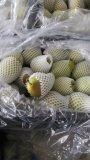 陕西大荔早酥梨,红香酥梨基地欢迎您