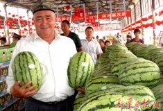 新疆安农二号大量批发销售