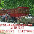 扶沟县尚村岗西瓜批发大市场