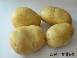 丽江太安优质丽薯6号脱毒种薯生产及供应情况介绍