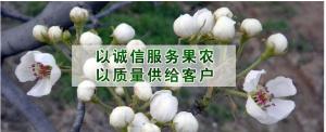 冠县技术服务随行就市,兰沃刘攀诚信合作
