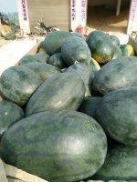 我最爱的《西瓜商情网》
