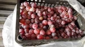 东莞市长征果品贸易有限公司专业代销红提
